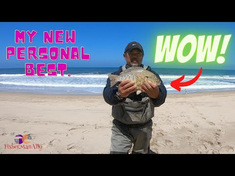 Barred Surfperch! Half Moon Bay Fishing