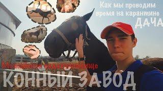МОЖАЙСКОЕ ВОДОХРАНИЛИЩЕ рыбалка Конный завод и как найти ТРИТОНОВ в России