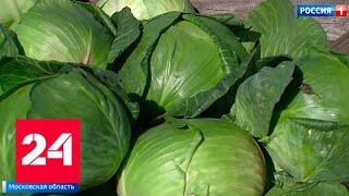 Смотреть видео Подмосковные агрохозяйства начали уборку урожая - Россия 24 онлайн