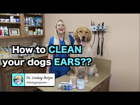 How to Clean Your Dogs Ears? | Zymox Ear Products