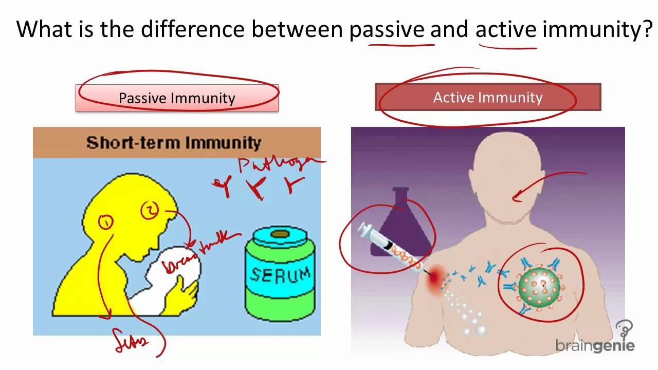 Active/passive immunity the immune system.