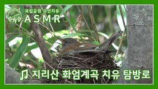 [국립공원 자연치유 ASMR]  지리산국립공원 화엄계곡…