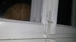 Кот на окне сидит и смотрит телевизор