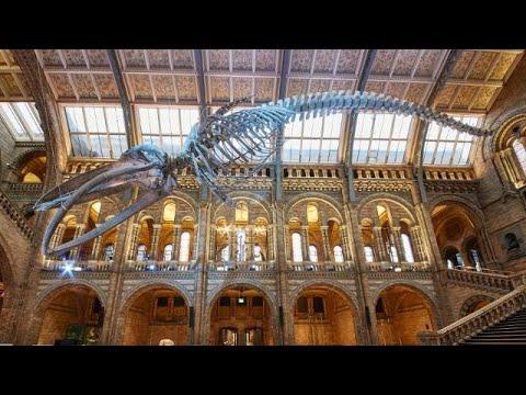 Natural History Museum, London   Walkthrough Tour July 2019   4k