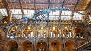 Natural History Museum, London | Walkthrough Tour July 2019 | 4k