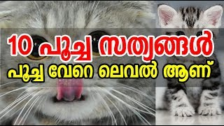 Top 10 facts about Cat | 10 പൂച്ച സത്യങ്ങള്...
