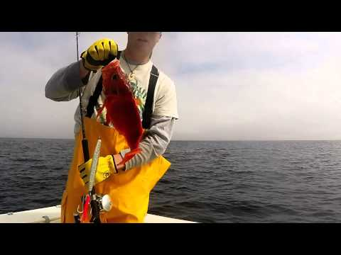 Bottom Fishing Off The Maine Coast With Whales And Basking Sharks