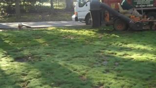 Landscape Gardener Spring CleanUp