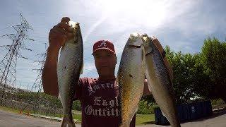 Fishing For Skipjack Herring