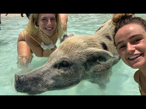 WE WENT TO THE PIG BEACH -  48 HOURS IN THE BAHAMAS