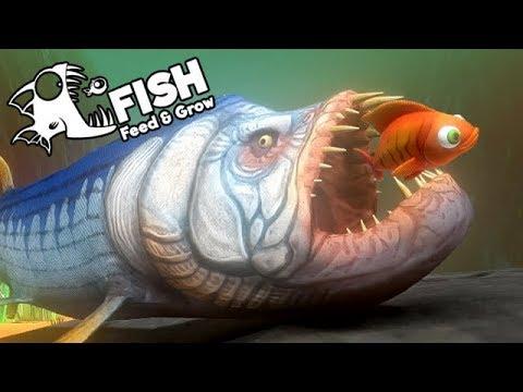Feed And Grow Fish Gameplay German - Urzeit Fisch Xiphactinus