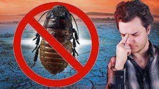Et Si Tous Les Insectes Étaient Éradiqués ? (en 360s)