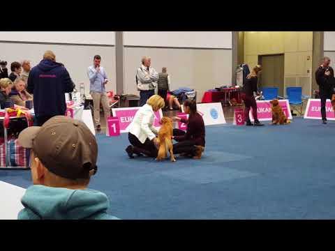 NSDTR - World Dog Show Leipzig Males Junior class