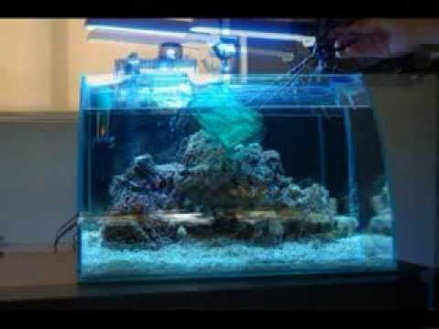 Montaje nano reef aquarium nano acuario marino youtube - Decoracion acuario marino ...