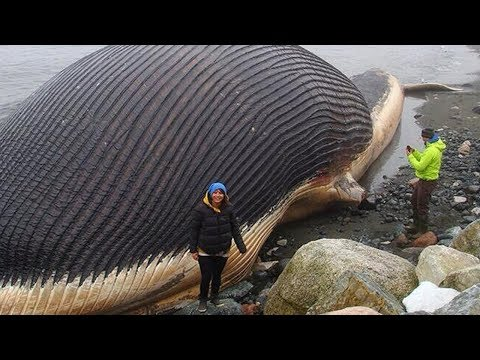 11 BIGGEST Things On Earth!