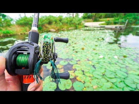 Fishing for BIG Bass in PADS!!!