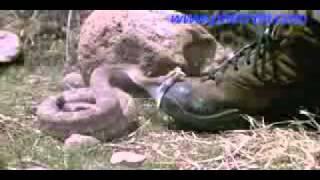 Un crotale mord un pied en slow motion (ralenti)