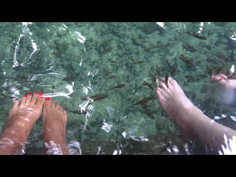 Help! Fish Are Eating Our Feet