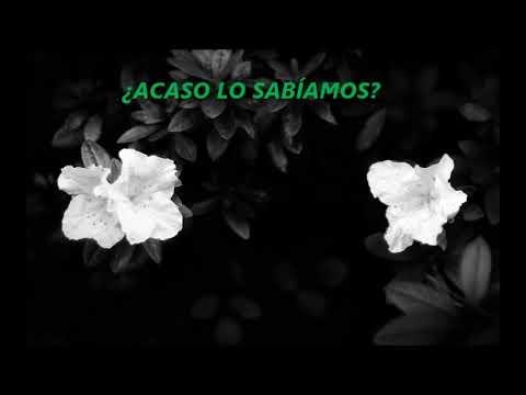 Broken Social Scene - Sweetest Kill (Sub. Español)