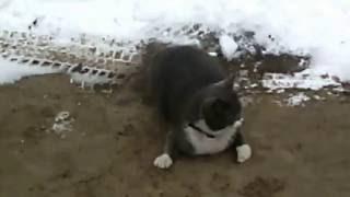 Кошка гуляла сама по себе