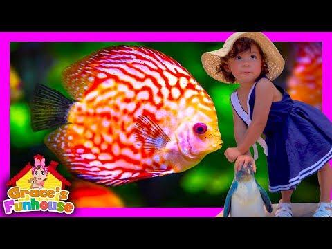 Amazing Sea Life at Aquarium in 4K UHD, Family Fun activities for Children & Toddlers Kids Video