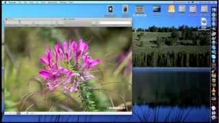 How to add text to a picture on a mac: Mac tips
