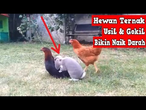 Hewan  UsiL & JahiL Bikin Naik DARAH!! Wkwkwk #Funny Compilation