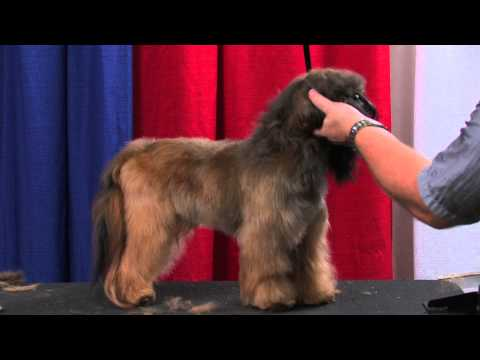 Puppy Cut Makeover by Jonathan David