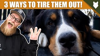 3 Tips To Tire Out Your BERNESE MOUNTAIN DOG Puppy