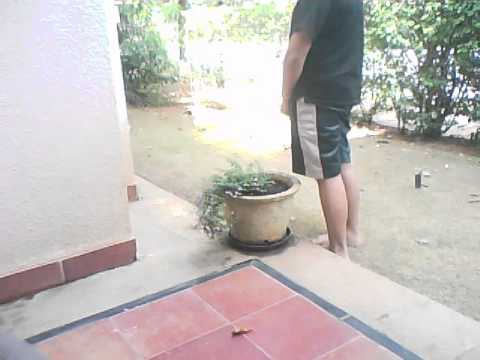 Girl pissing in pot