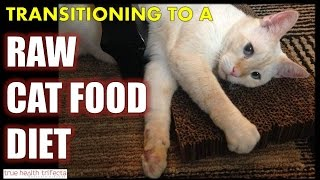 How to Transition Your Cat to a RAW FOOD DIET - Healthy Cat Feeding Tips