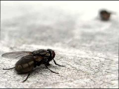 Mosquito repellent repelente natural contra los mosquitos - Como alejar las ratas de la casa ...