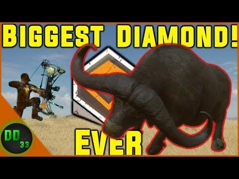 The BIGGEST DIAMOND CAPE BUFFALO EVER!!!