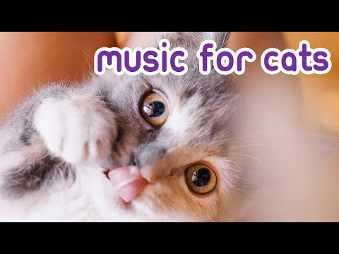 Music To Soothe Your Anxious Cat! - Songs for Nervous Cats!