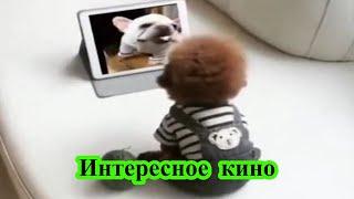 Интересное кино (нарезка видео о животных)