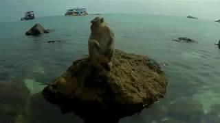 Ко Лан обезьяний пляж октябрь 2019г Тайланд