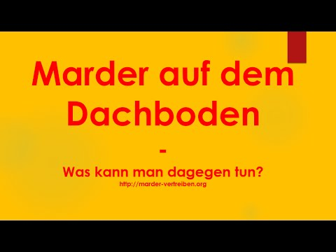 marder auf dem dachboden was kann man gegen marder auf dem dachboden tun youtube. Black Bedroom Furniture Sets. Home Design Ideas