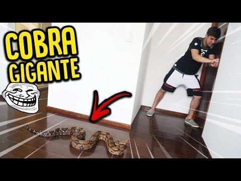 PRENDI O REZENDE COM UMA COBRA GIGANTE !! ( A VINGANÇA ) - TROLLANDO REZENDE [ REZENDE EVIL ]