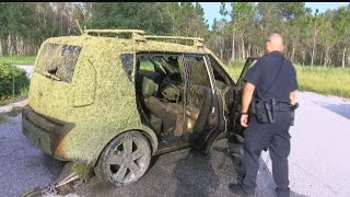 Years-old stolen car discovered in Cape Coral pond