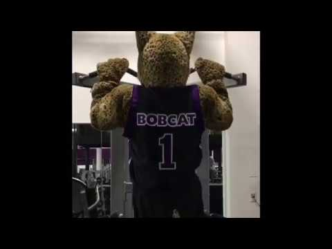 NYU Bobcat training for the Catalyst Campaign