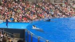 Sea World Florida.Умные киты  Касатки