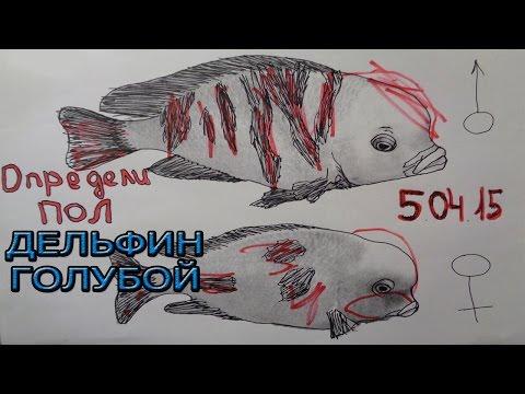 #6 Определи пол у Голубого Дельфина