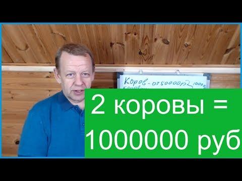 Бизнес в деревне 2 коровы. Семья может получить 1000000 рублей в год.