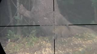 scope cam pest control with air rifle