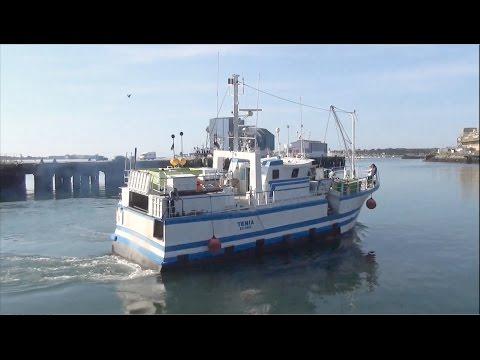 Tenia ; Bateau de Handaye ; Port de Lorient ; Fileyeur ; Kéroman ; Bayonne ; Bretagne ; France