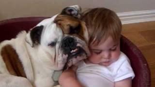 Bulldog And Baby Video