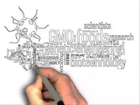 What is GMO? (Genetically Modified Organisms)