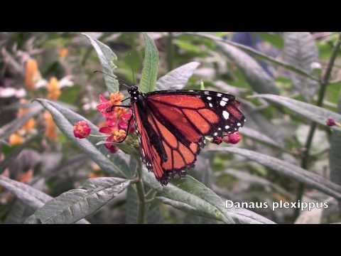 Montreal Botanical Gardens, Butterflies Go Free Exhibition