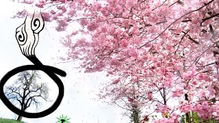 花咲爺版(盛開的櫻花) ─ 歌曲:花束/北乃きい中文製作:樂天的喵星人其...