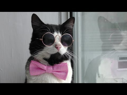 Tom the cat models bow tie and glasses - 4K Ultra Hd - Original